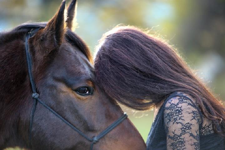 Fühle dein Pferd